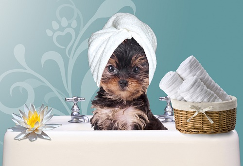 Pet Grooming & spa